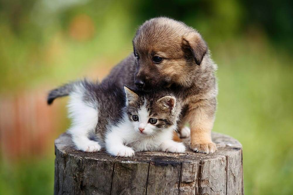Cute puppy and kitten on the grass outdoor